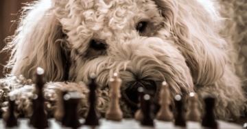 Denkspiele für Hunde