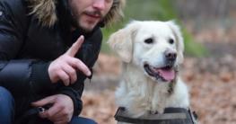 Hund zieht an der Leine - Artikel