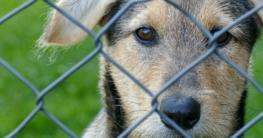 Unsichtbarer Hundezaun - Der Ratgeberartikel