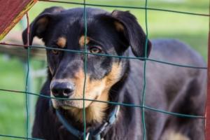 Unsichtbarer Hundezaun trainiert