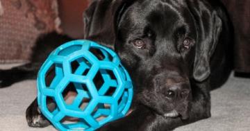 Was ist eine Hundeamme - Blogartikel