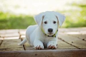 Was muss bei Hundeammen beachtet werden