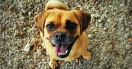 Welche Hundeverischerung - Ratgeber