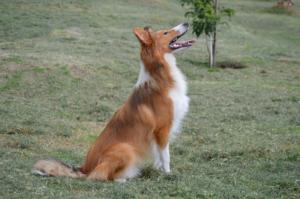 Hundetraining – Die Hundeerziehung