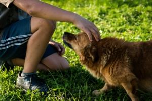 Welche Hundeerziehung ist die Beste