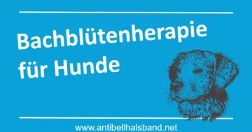 Bachblütenherapie für Hunde